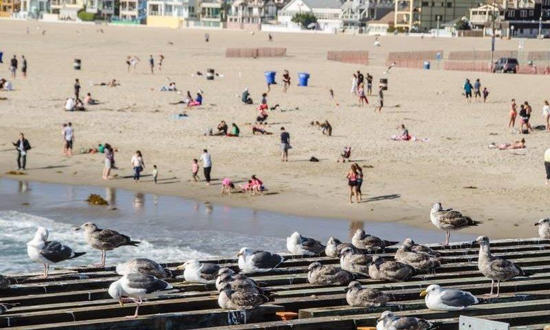 Seaport 17th - surrounding Santa Monica Areas